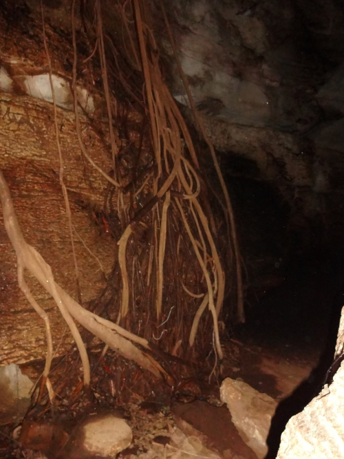 ROOTSICLE. n. roots of trees or plants which grow into a cave cavity and become calcified. The roots and speleothem comprising the rootsicle. cf. rhizomorph.